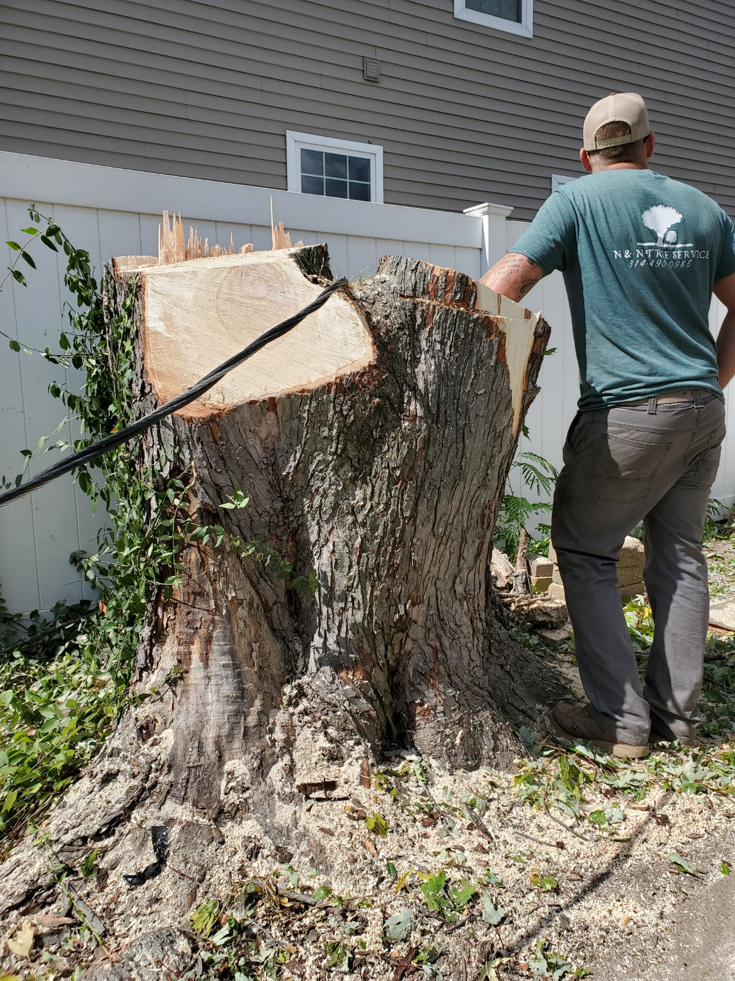 large stump from a tree removed in eureka missouri