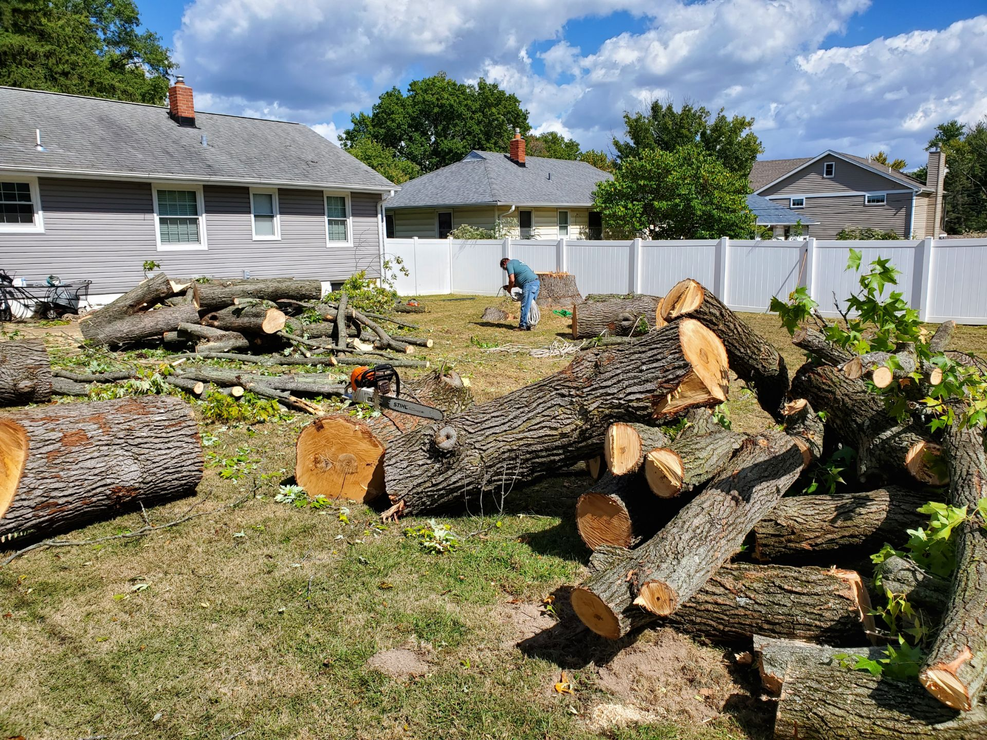tree removal and tree services