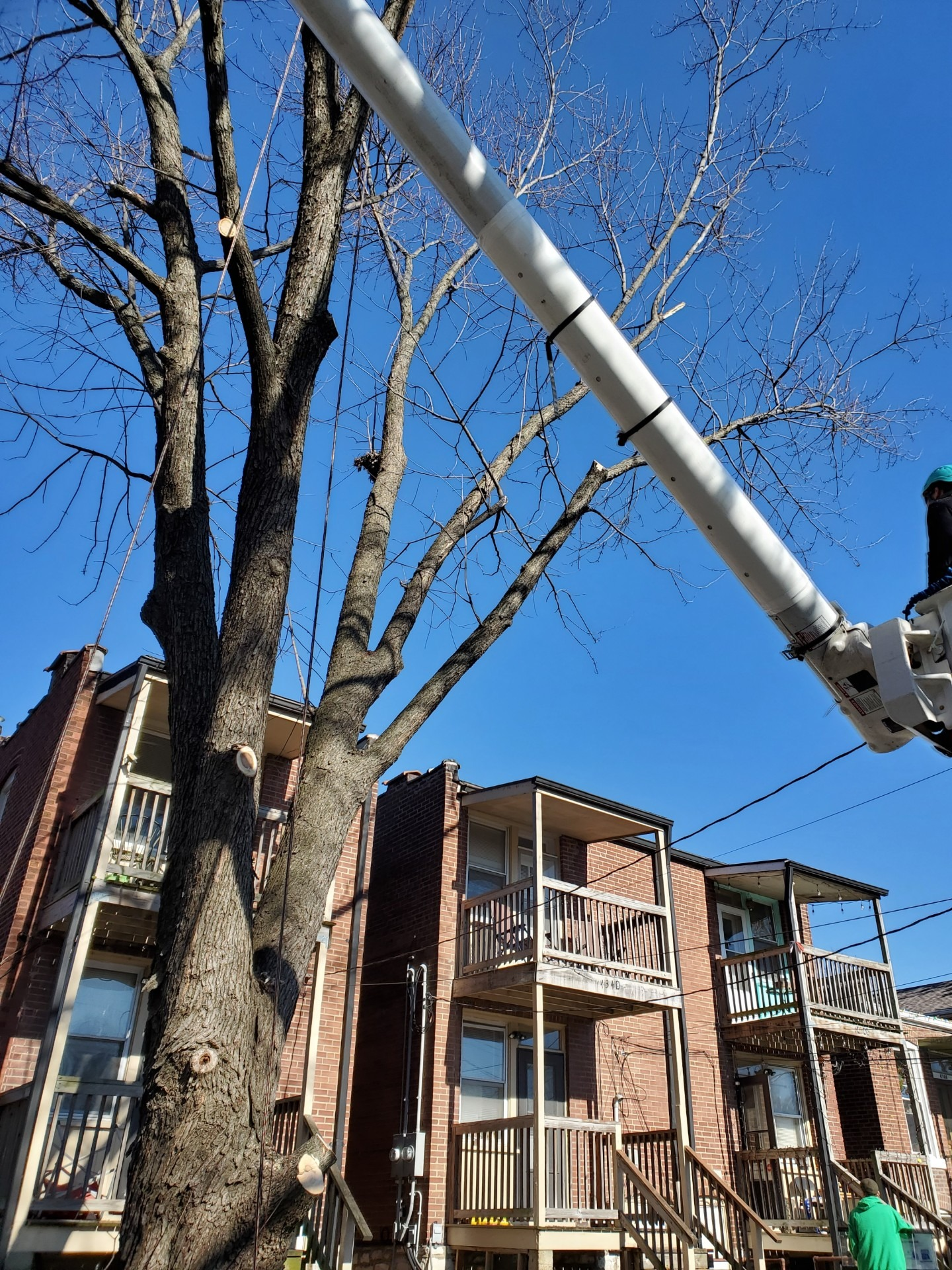 tree trimming and tree removal services